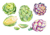 green and pupler artichokes watercolor on white background