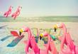 flamingo family fun 2