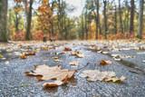 autumn leaf on road