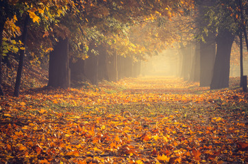 Autumn colorful tree alley in the park on a sunny day in Krakow, Poland