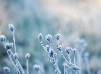 abstract natural background from frozen plant covered with hoarfrost or rime