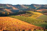 panorama agricolo di vigneti in piemonte