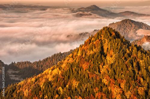 Fototapeta Morning sea of fog seen from Pieniny mountains, autumn, Poland