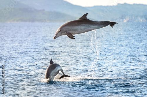 Fotobehang Dolfijn Doplhin jumping near coast in Croatia