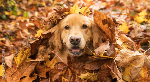 Golden Retriever Dog in a pile of Fall leaves - 125321382