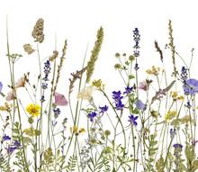des fleurs et des herbes. Une illustration peut être connecter de façon transparente à l'horizontale