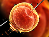Artificial insemination. Needle puncture the cell membrane - 125353149