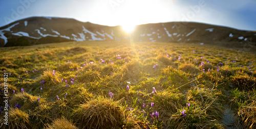 Fotobehang Marokko glade in mountains covered in flowers