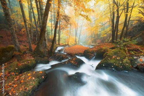 Rivière et forêt en automne