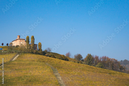 Panorama collinare con vigneti in autunno
