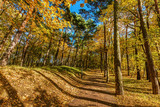 Autumn forest with colorful trees, falling leaves on a sunny day
