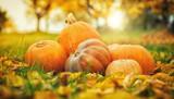 Autumn pumpkins in fallen leaves, Thanksgiving concept