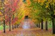 Fall Colors in Oregon