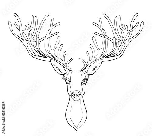 Fototapeta deer head. Beautiful horns. speaking look. Vector illustration