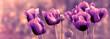 Beautiful purple poppy flowers in meadow  - close-up