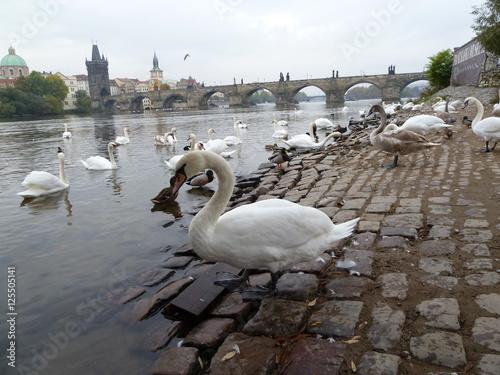 Poster Karlsbrücke Prag
