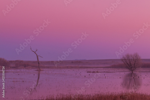 Fotobehang Candy roze Sunrise Reflection at Bosque del Apache NWR New Mexico