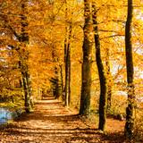 Wald, Allee und Wanderweg im Herbst