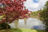 English park in the late spring; japanese maple tree with the lake on the background, selective focus