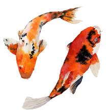 Aquarelle arc-oriental carpe définie. poissons Koi isolé sur fond blanc. illustration sous-marine pour la conception, de fond ou de tissu