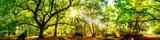 Wald Panorama mit Sonne
