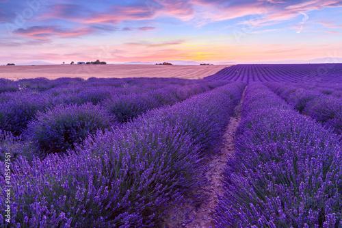 Foto op Canvas Violet Sunset over a violet lavender field in Provence