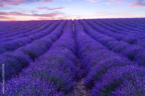 Foto op Canvas Violet Lavender field summer sunset landscape near Valensole