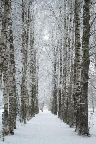 Aluminium Berkenbos winter park