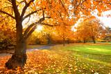 Sonne im Herbst, schönes Herbstwetter im Park