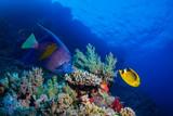 Coral garden - 125575161