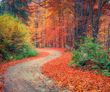 Colorful autumn csene in the mountain forest