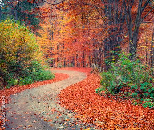 Papiers peints Corail Colorful autumn csene in the mountain forest