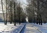 Winter landscape, alley