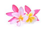 frangipani flower isolated on white - 125627398