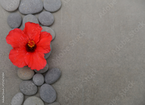 Poster Spa Hibiscus theme objects on grey background