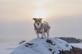 Dog standing on top of rock at hazy winter evening