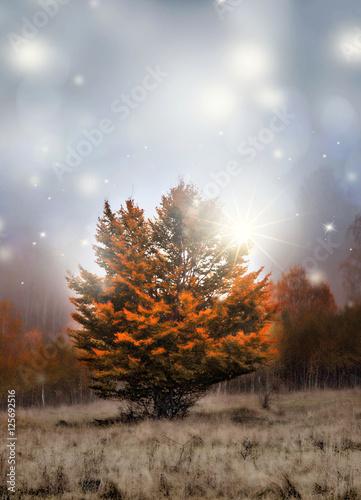 magiczne-drzewo