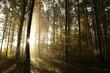 Autumn deciduous forest at sunrise