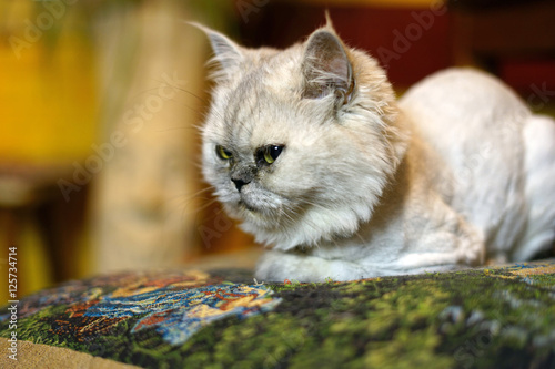 Fotografiet cat