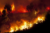Forest Fire - 125738980