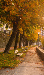 Benches in alley at autumn. Foliage in park at sunset. Warm fall in Europe
