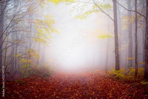 mglowy-jesien-ranek-w-lesie