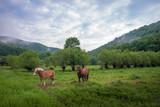Bieszczady, Konie na łące. Mglisty wiosenny poranek