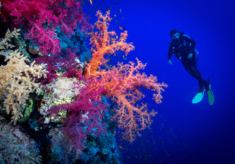 Woman diver explores the soft corals on Soraya Reef, Red Sea, Egypt