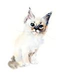 Kitten. Watercolor hand drawn illustration