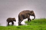 Elephant, Sri Lanka, Asia, Animal - 003