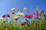 Fototapety Grußkarte - bunte Blumenwiese - Sommerblumen