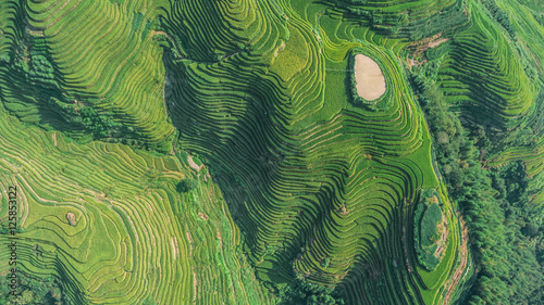 In de dag Rijstvelden Top view or aerial shot of fresh green and yellow rice fields.Longsheng or Longji Rice Terrace in Ping An Village, Longsheng County, China.