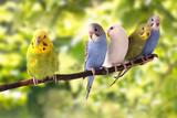 bird - 125865911