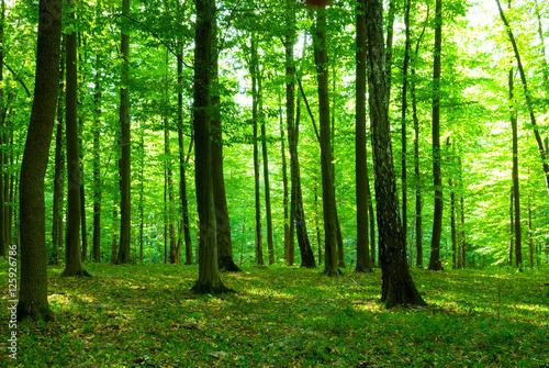 Keuken foto achterwand Bossen forest in morning